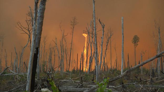 One of the central Florida wild fires